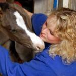 Equine Workshop – Feb. 1